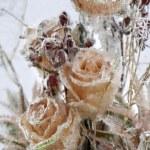 Frozen flowers. — Stock Photo #18761015