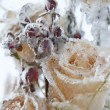 Stock Photo: Frozen flowers.