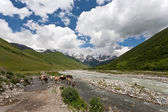 Mountain landscape with cows. — Stock Photo