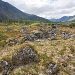 Tundra landscape. — Stock Photo