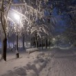 Stock Photo: Park covered with snow at night.