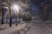 Park mit schnee bedeckt, in der nacht. — Stockfoto