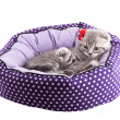 Stock Photo: Isolated kitten