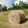 Rolling haystack. — Stock Photo #50411787