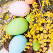 Easter Eggs In Pastel Colors — Stock Photo