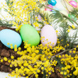 Arrangement With Easter Eggs And Mimosa — Stock Photo