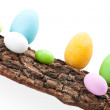 Raw Of Easter Eggs On Bark — Stock Photo