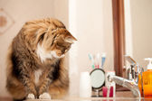 Cat Watching The Water From The Faucet — Stock Photo