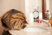 Cat On The Washbasin — Stock Photo