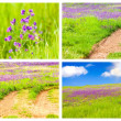 Meadow Backgrounds Collage — Stock Photo