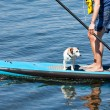 Stock Photo: Paddle Surfing