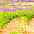 Land With Green Grass And Purple Flowers — Stock Photo