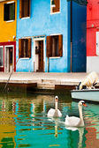 Swans In Burano, Italy — Stock Photo