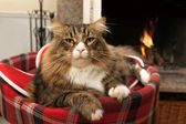 Cat Sitting In Front Of Fireplace — Stock Photo