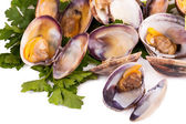 Clams Stewed — Stock Photo