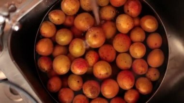 Washing Apricots — Stock Video