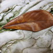 Stock Photo: Autumn leaf on veined rock