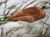 Autumn leaf on veined rock — Stock Photo