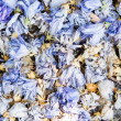 Background of colourful blue potpourri — Stock Photo
