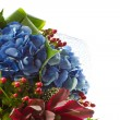 Stock Photo: Beautiful bouquet of Hydrangeas