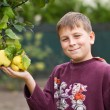 Boy near Quince — Stock Photo #13253637