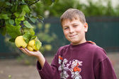 Boy near Quince — Stock Photo