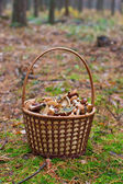 Basket with mushrooms in the forest — Stock Photo