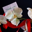 Orchid flower — Stock Photo #17681281