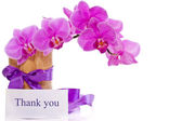 Phalaenopsis flowers — Stock Photo