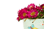 Blooming chrysanthemums in a pot — Stock Photo