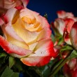 Bouquet of beautiful roses — Stock Photo