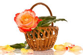 Beautiful roses in a basket — Stock Photo