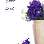 Hyacinth — Stock Photo #24838877