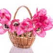 Pink tulips in a basket — Stock Photo