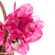 Pink tulips in a basket — Stock Photo #25063103