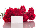Red carnation — Stock Photo