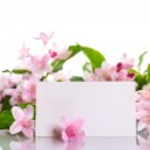 Weigel beautiful blooming flowers — Stock Photo #25698835