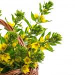 Beautiful yellow summer flowers — Stock Photo #25698857