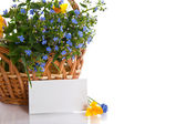Bouquet of early spring flowers — Stock Photo