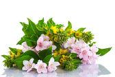 Beautiful summer bouquet — Stock Photo