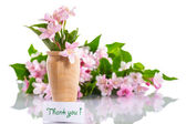 Weigel beautiful blooming flowers — Stock Photo