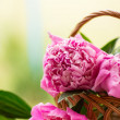 Peonies — Stock Photo #26209619