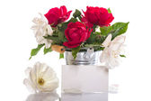 Red and white rose — Stock Photo