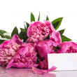 Pink peonies — Stock Photo #26274571
