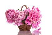 Różowe piwonie — Zdjęcie stockowe