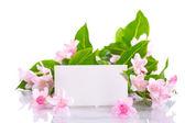 Weigel beautiful flowers — Stock Photo