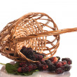 Mulberry — Stock Photo #26620585