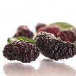 Mulberry — Stock Photo #26620603