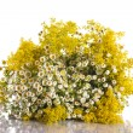 Summer bouquet of wild flowers — Stock Photo #26849271