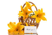 żółta lilia — Zdjęcie stockowe